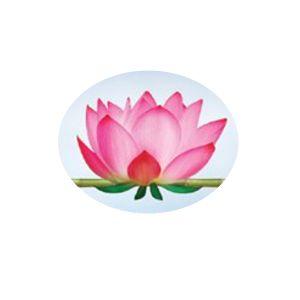 fleur de lotus-001